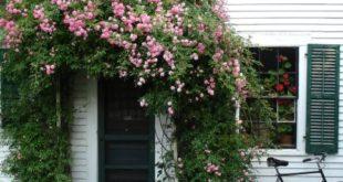 Вертикальное озеленение загородных домов и коттеджей