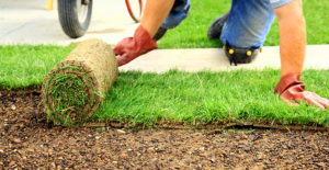 Укладка и уход за рулонным газоном
